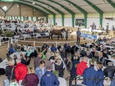 Open-Yearling-Sale-2017_11I6788