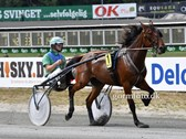 Fetlock Joint Odense 2819